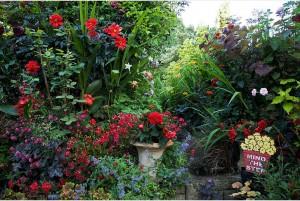 Edwin's garden 2