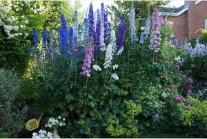 Edwin's garden 3